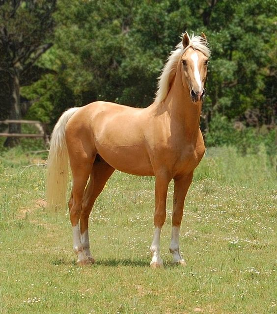 I've always been partial to the Palomino's...and I think by this picture you can see why...so beautiful!