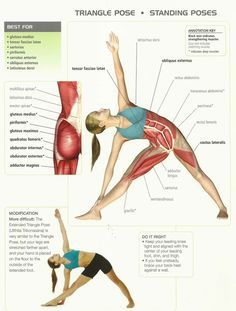 The triangle yoga pose improves the body�s flexibility