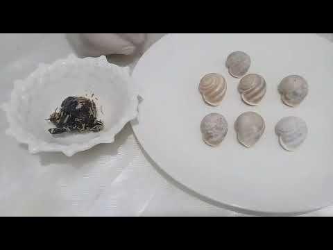 تفوسيخة 7 حلزونات خطيييرة بزاف للبنات متجي تكمل 7 أيام حتى يجي النصيب Youtube Plates Tableware