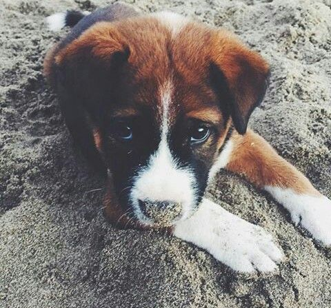 Sand covered nose