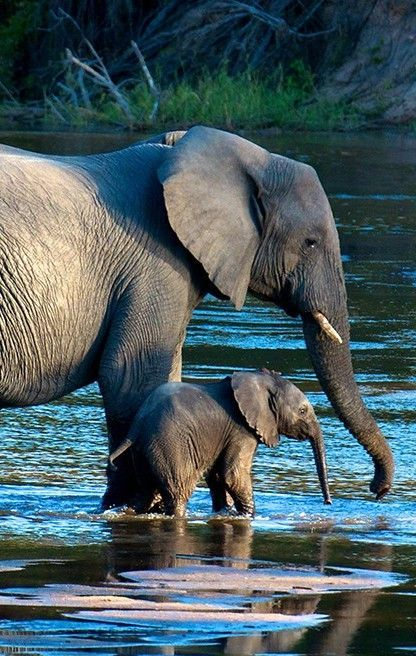 Elephants content to find water