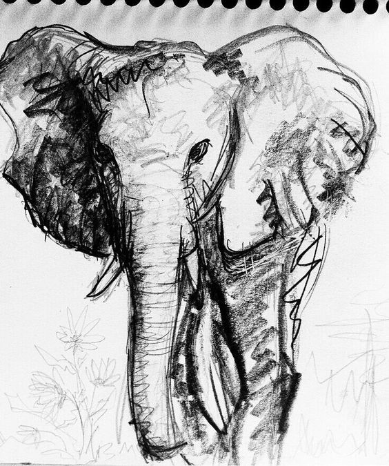 Rough sketch animal elephant for a highschool drawing exercise