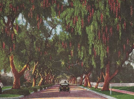 city of south pasadena christmas tree pickup houston