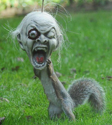 Picture in The Sun (UK newspaper) today,   Even the squirrels are getting ready for Halloween ;)