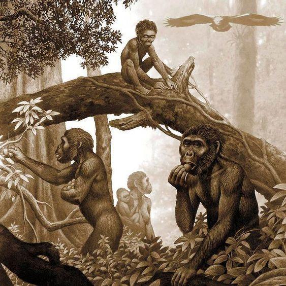 Les Premiers Hommes Les Premiers Hommes Evolution Humaine Animaux
