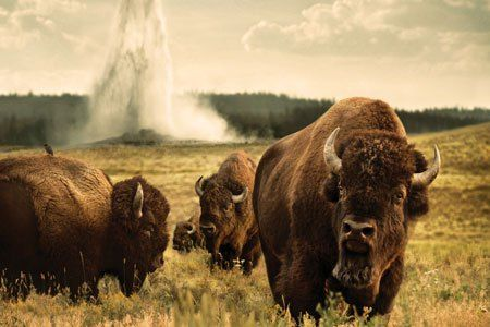 National Geographic Traveller and Grand American Adventures have teamed up to offer you the chance to win an incredible tour of the Yellowstone Source: Win a nine-day tour of Yellowstone | Nat Geo ...