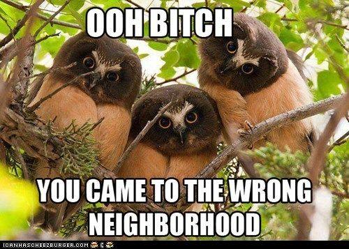 Owls...still evil.