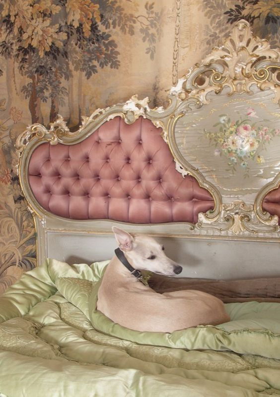 """perfect. my excuse for getting this bedroom can be """"it just went so well with the greyhound"""""""