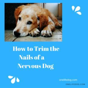 Does your dog hate having his nails trimmed?  Check out onelifedog.com for an easy way to trim your dog's nails.