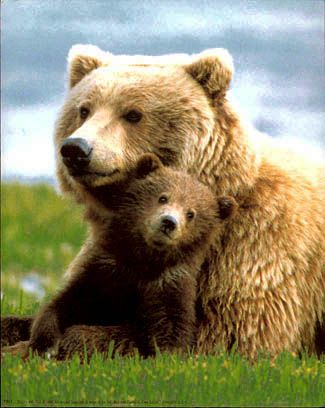 Mother Bear and Cub - Bears are an important part in Native American culture as…