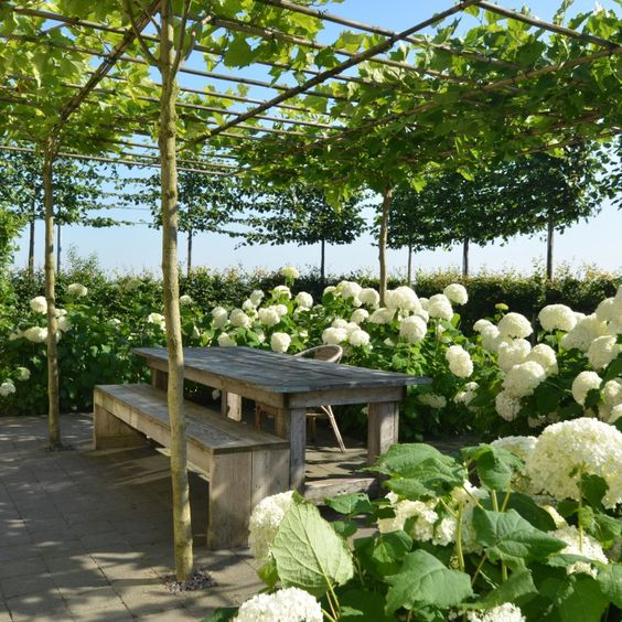 De dakplatanen zorgen voor een fijne schaduw boven het terras tuin pinterest vines - Schaduw maken ...
