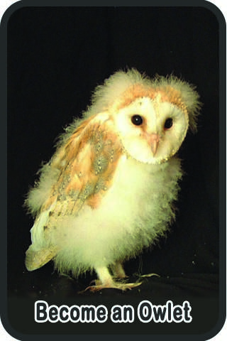 Sidebar 2 Become An Owlet | Owls | Pinterest | Owl facts, Kid and Owl