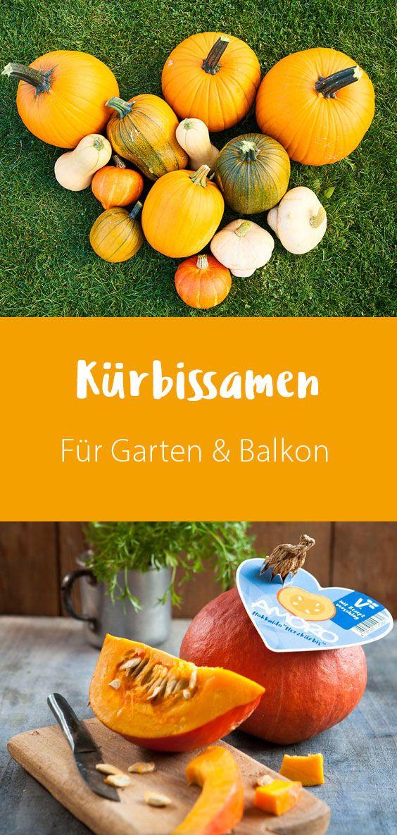Kurbissamen Fur Garten Balkon In 2020 Kurbis Pflanzen Garten Hokkaido Kurbis