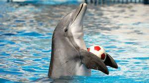 Znalezione obrazy dla zapytania delfiny zdjecia