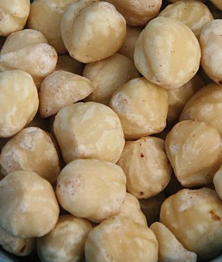 Hazelnut, Collection - Specialty Fruits at Burpee.com