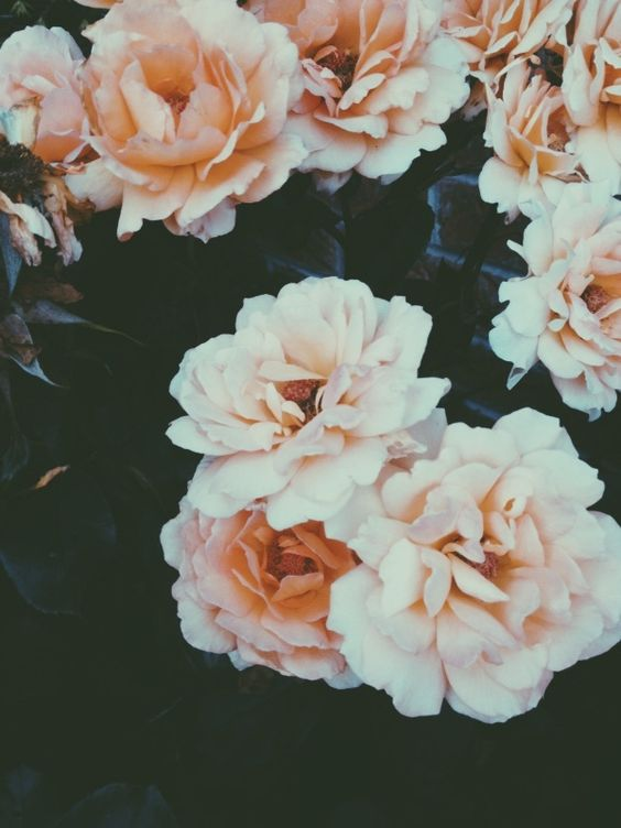 VSCO Grid | floral | Pinterest | Copper, Of life and Nature