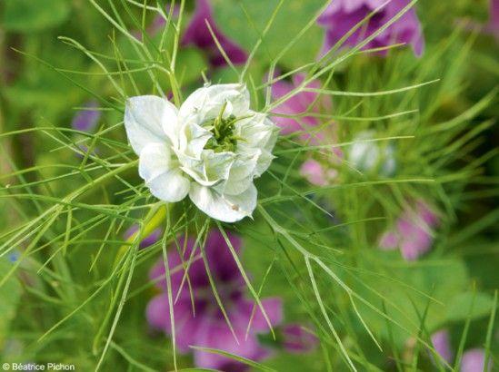 14 fleurs qui ne craignent pas l 39 hiver plantes s rum et mauve - Plantes qui ne craignent pas le gel ...
