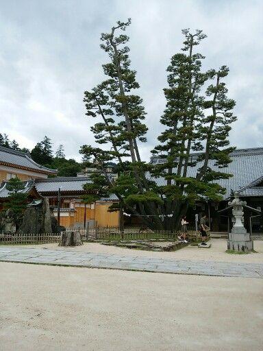 厳島神社 大願寺(弁財天)