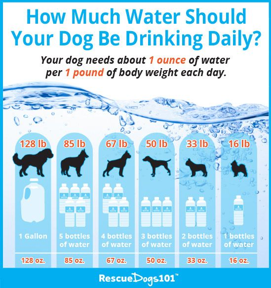 11 Great Ideas On How To Get Your Dog To Drink Water Dog Water Fountain Dog Health Dog Infographic