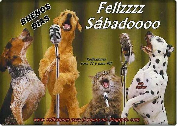 Resultado de imagen para Feliz sábado ...con imágenes de animales ...