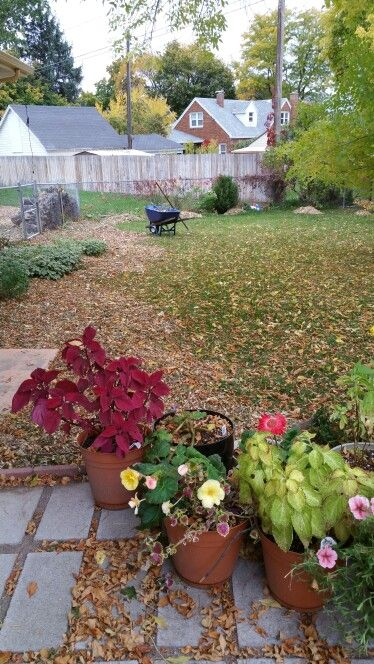 October 11, 2016- Lots of work to do.  Mulching, raking and hauling...oh my!