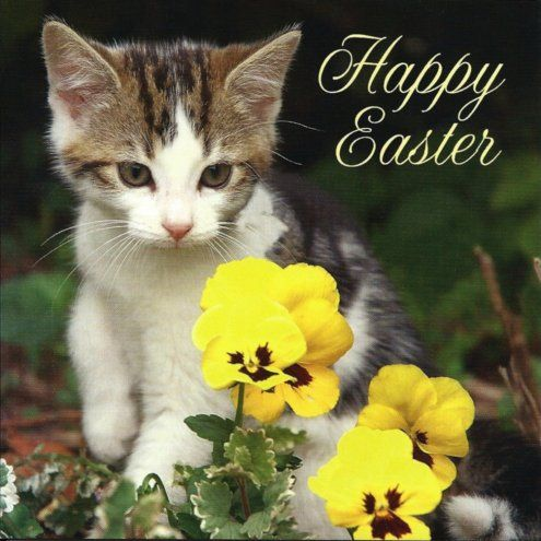 Image result for happy easter cutest images with pets