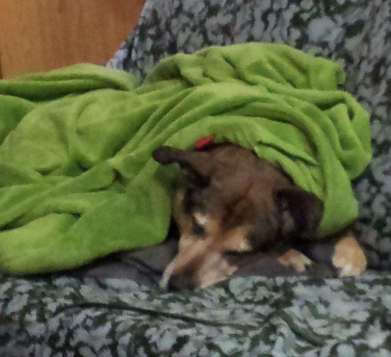 Perrito arropado que tiene frío