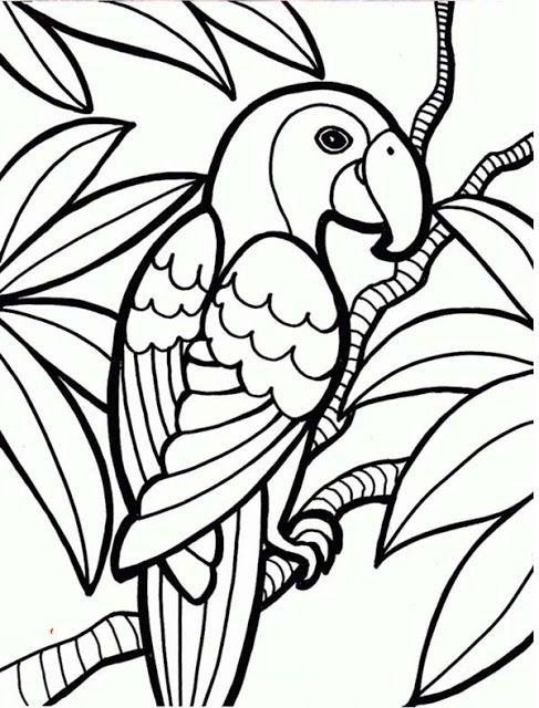 Mewarnai Gambar Hewan Burung Kakak Tua Halaman Mewarnai Adult