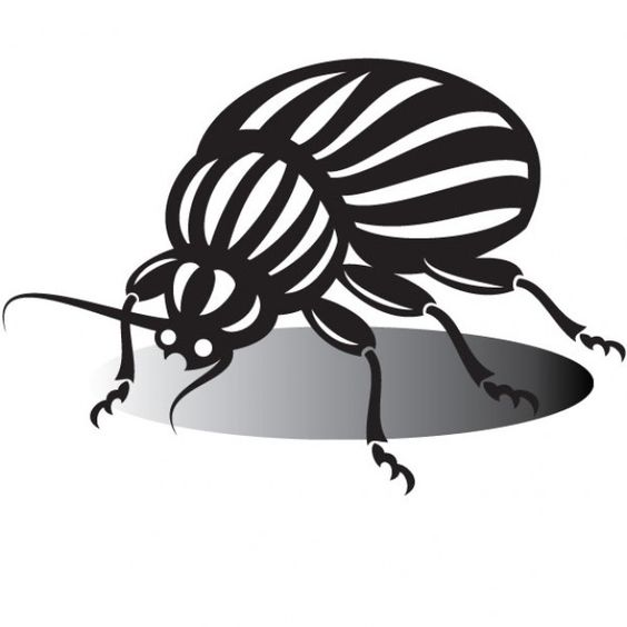 Image Bank Beetle drawing in black and white