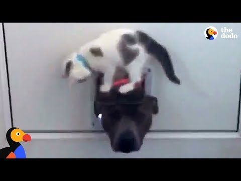 Click To Meet A Feisty Kitten That Is Doing An Expert Job Of Guarding Her Cat Flap Dogs Cats And Kittens Like Animals