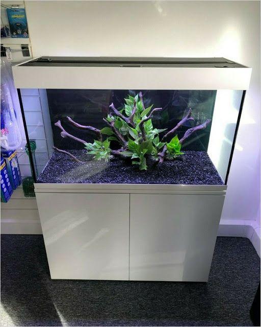Aquarium Fish Tank In 2020 Fresh Water Fish Tank Cool Fish Tanks Aquarium Fish Tank