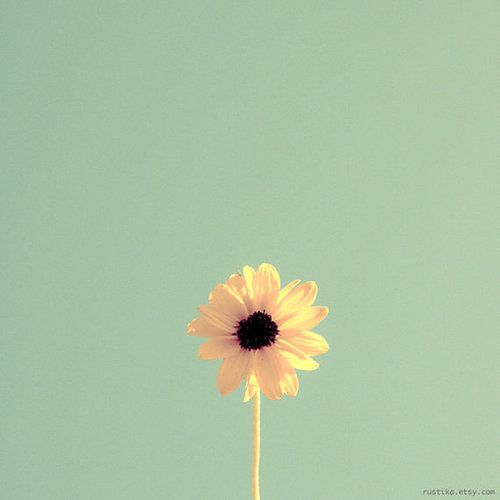 #yellow #flower