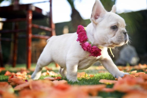 Puppy ring bearer! 39th San Diego Wedding Party Expo on July 31, 2016 at the NTC venues at Liberty station. @pamelaannnoxon    Enjoy a doggie ring bearer contest and a signature cocktail from Bella Beverage Catering