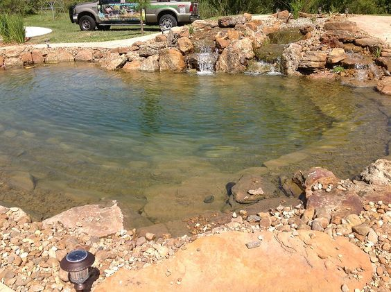 Ponds and swim on pinterest for Garden pool ecosystem