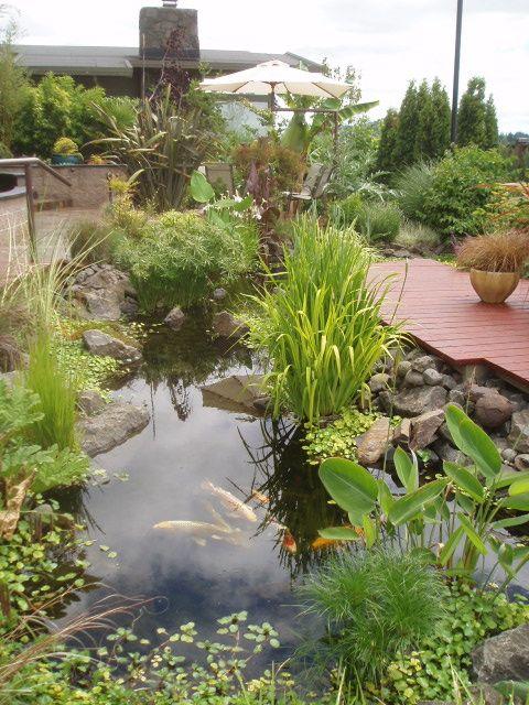Koi pond near eugene oregon water in the garden for Koi ponds near me