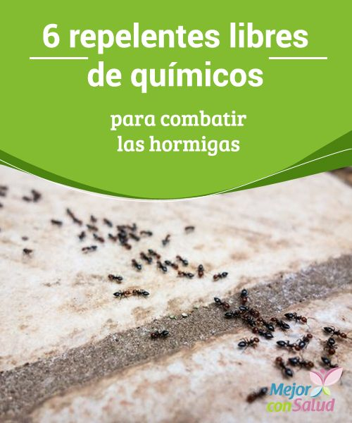 6 repelentes libres de químicos para combatir las hormigas  La mayoría de los hogares tienen que lidiar en algún momento contra la invasión de hormigas en la cocina u otros espacios.