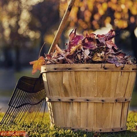 صور عن الخريف أجمل خلفيات عن فصل الخريف Raking Leaves Pretty Leaf Gardening Tips