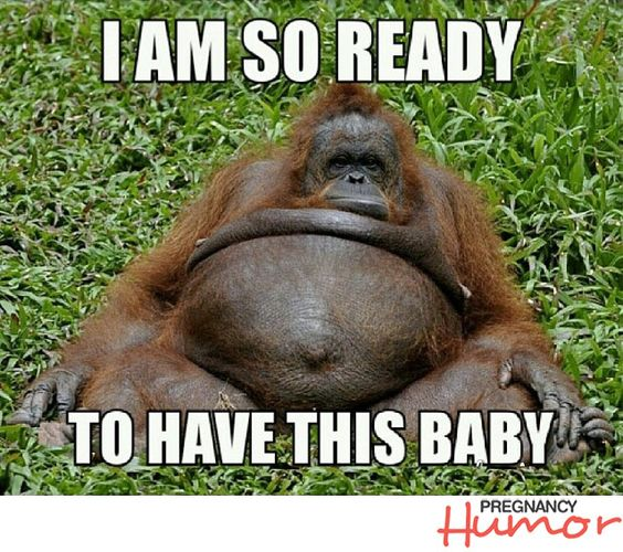 Pregnant Orangutan Saying I am So ready to have this baby …: