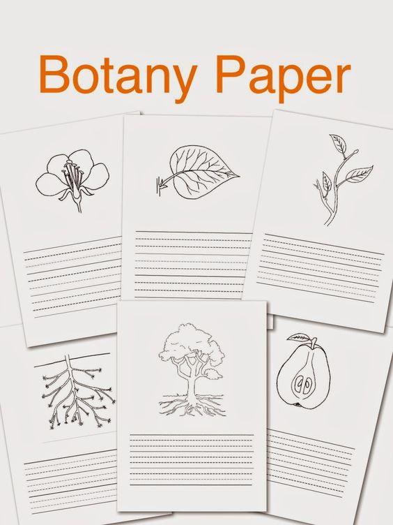 Botany typed paper