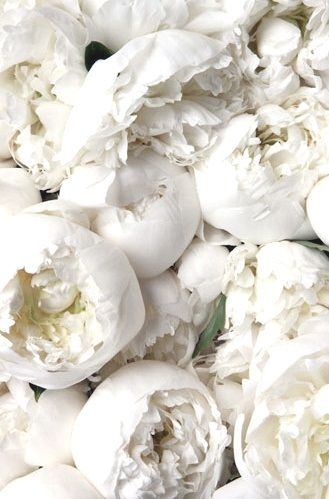 white peonies ~ a favorite: