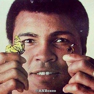 Ali - Butterfly - Bee