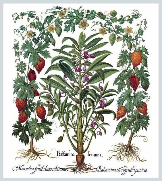 Herbarium (Mega Square) besler by Parkstone Press -   Published August 14, 2010
