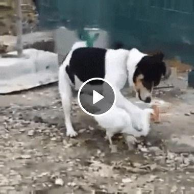 Cachorro brincando com seu novo amigo