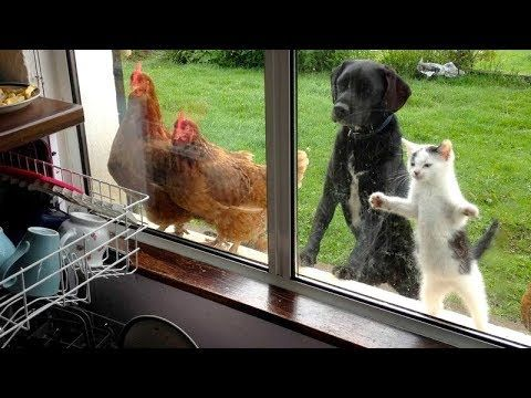 The Funniest Animal Videos Are You Ready For This Laugh Bomb