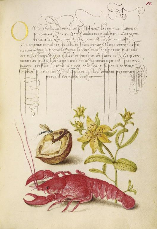 Joris Hoefnagel (illuminator)  [Flemish / Hungarian, 1542 - 1600], and Georg Bocskay (scribe)  [Hungarian, died 1575],                                Insect, English Walnut, Saint Johns Wort, and Crayfish,                                Flemish and Hungarian, 1561 - 1562: