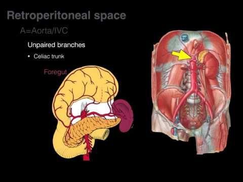 Retroperitoneal space and Retroperitoneal organs - YouTube