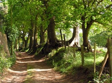 Tree lined country lane at Linslade - Bedfordshire, England