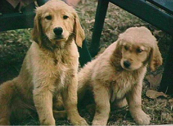 Megan and Jordan as puppies.