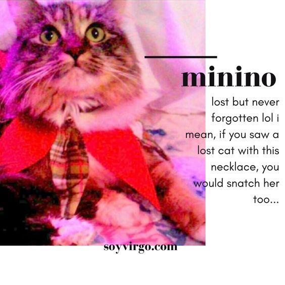 get to know me | soyvirgo.com minino my cat that got lost around xmas