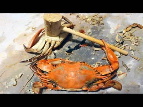 Learn 10 Blue Crab Hacks How To Catch Them And When Plus Cooking Suggestions With Video Blue Crab Taste Amazing Learn M Crab Blue Crab Cooking Suggestions